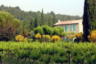 provence11.jpg