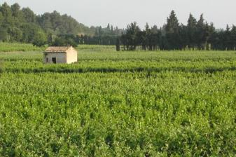provence4.jpg