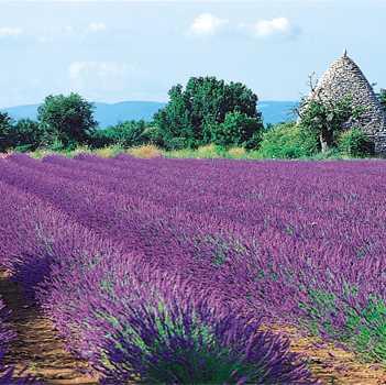 Lesson 5: Provence Aix-en-provence