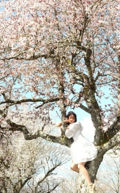 blossom-tree-5-520x833