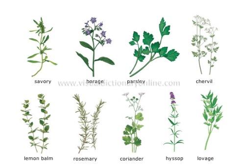herbs_2