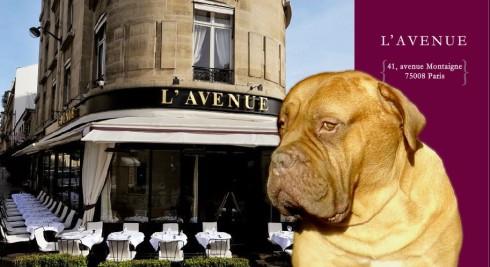 Avenue Restaurant on Avenue Restaurant