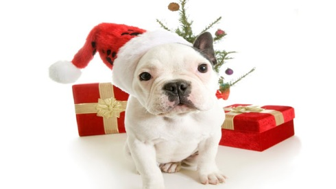 christmas dog wallpaper 15