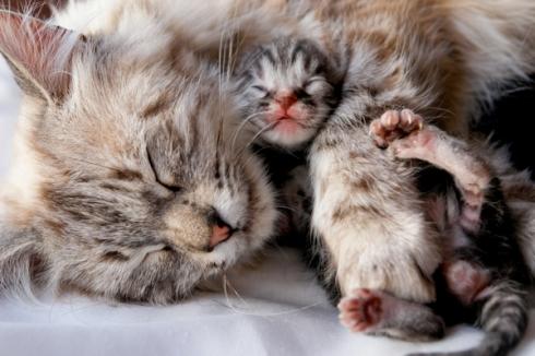 600px-kitten-hug