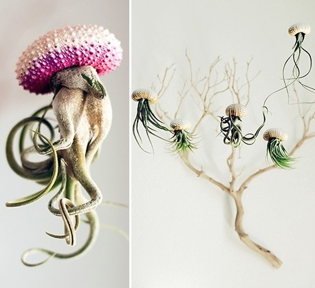 FANTASTICAL AIRPLANTS
